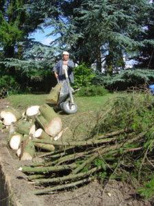 abattage de sapins découpe de troncs pour cheminée