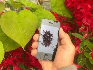 jardinier-telephone-paysagiste
